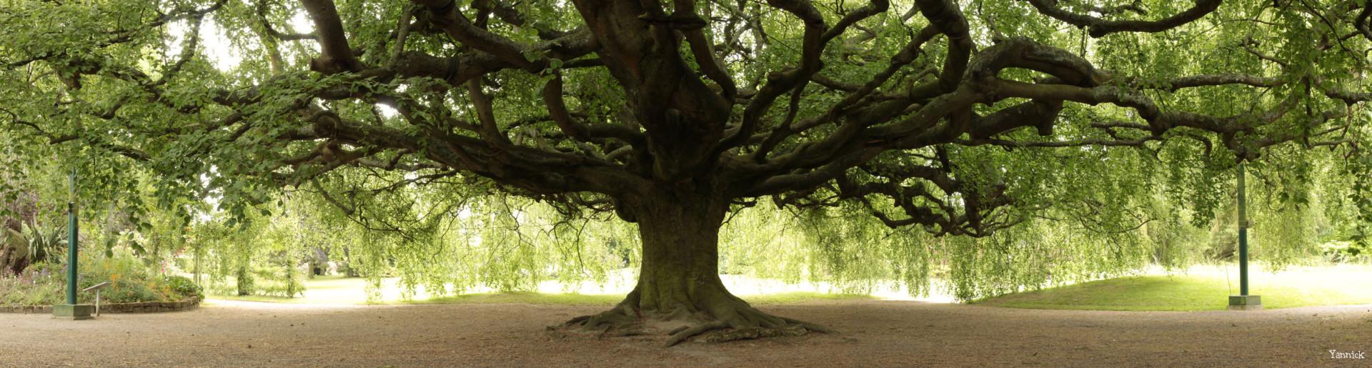 sous l`arbre